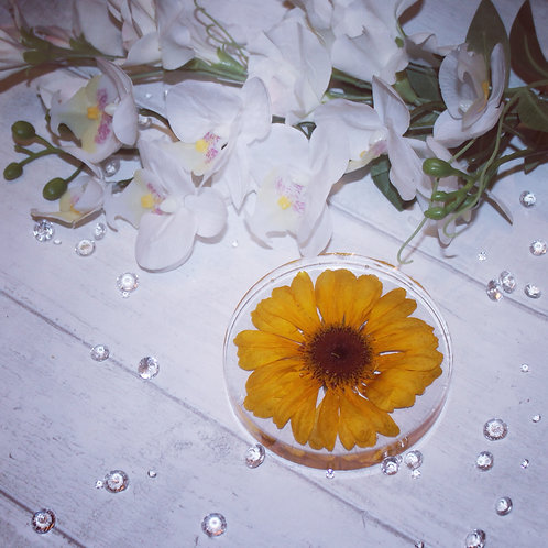 Preserved single flower or multiple small flowers in a disc