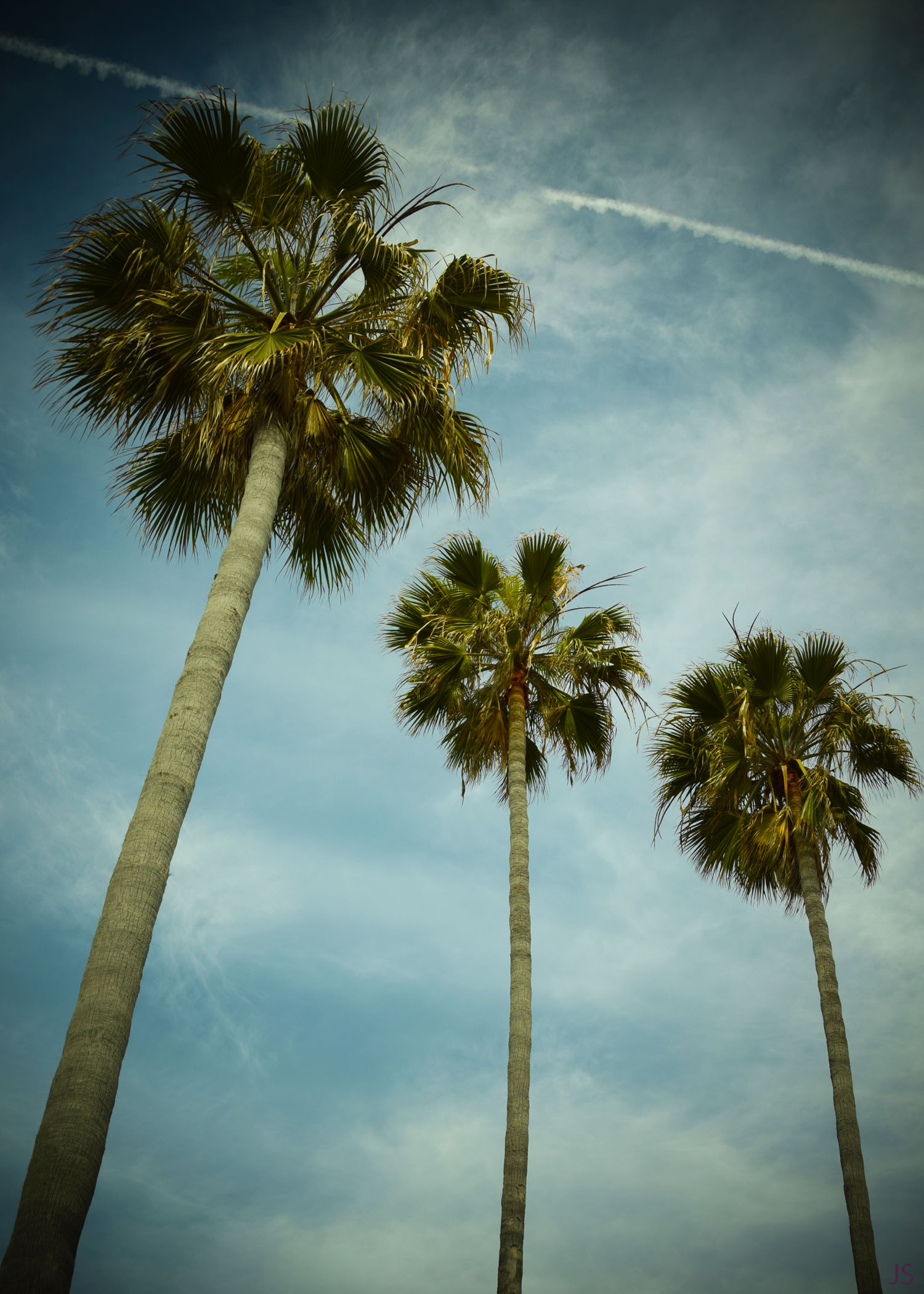 CaliTrees
