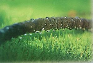 Soaker Hose over Lawn, 1.jpg
