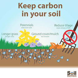 carbon-sequestration-infographic-final-k