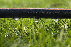 Soaker Hose over Lawn, 2.jpg