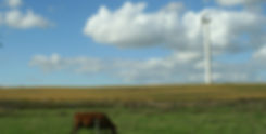 MN Wind Turbine c Cow.JPG