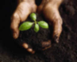 Compost in Hands with Seedling.png