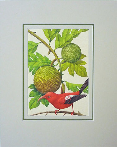 Bird illustration mounted to Fine Art Trade Guild conservation standard with stunning treble mount.