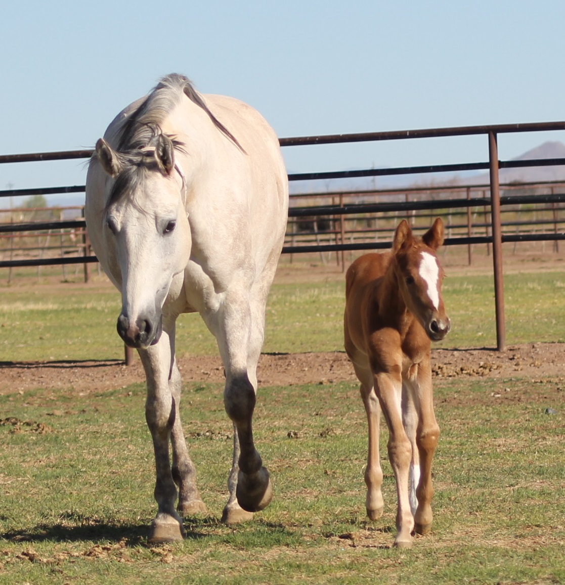 Cowgirl Horse and Flash's litte sister