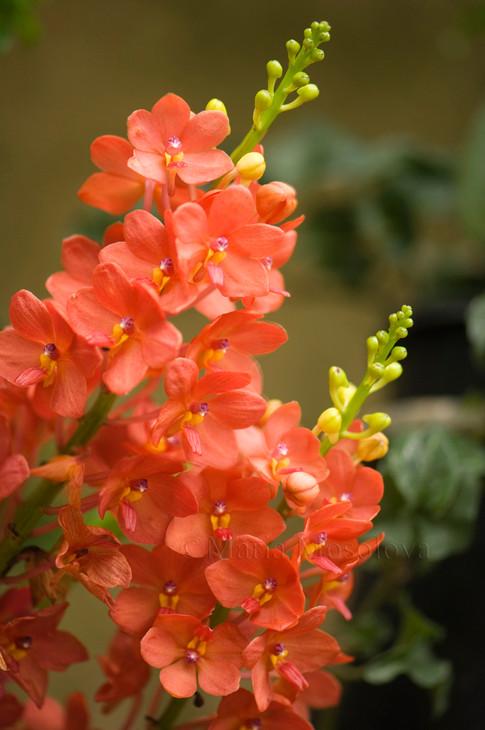 Vanda Eileen Beauty