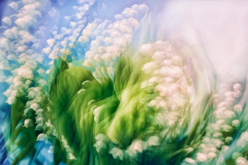 Lily of the Valley Swirl