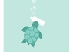 Proteggiamo le tartarughe