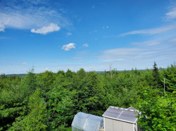View from deck towards forest