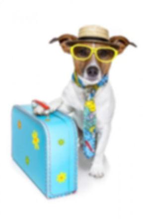 dog_trip.jpg