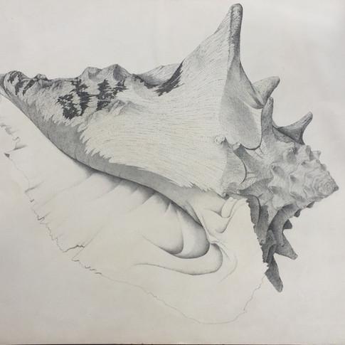 Insomniac's Seashell