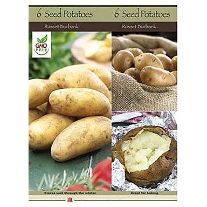 Seed Potato Russet Burbank