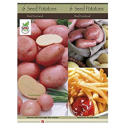 Seed Potato Red Norland