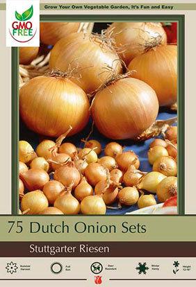 Dutch Onion Sets Yellow