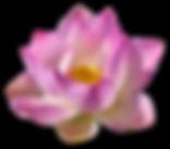 lotus-3192656_1920.png