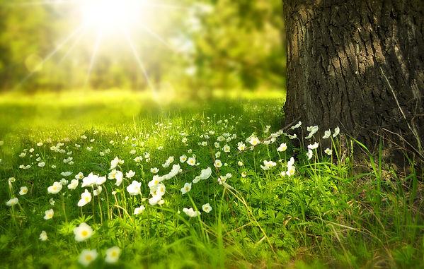 spring-276014_1920.jpg