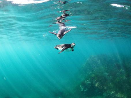 Discover the Next Evolution of Galápagos Cruises - Silver Origin