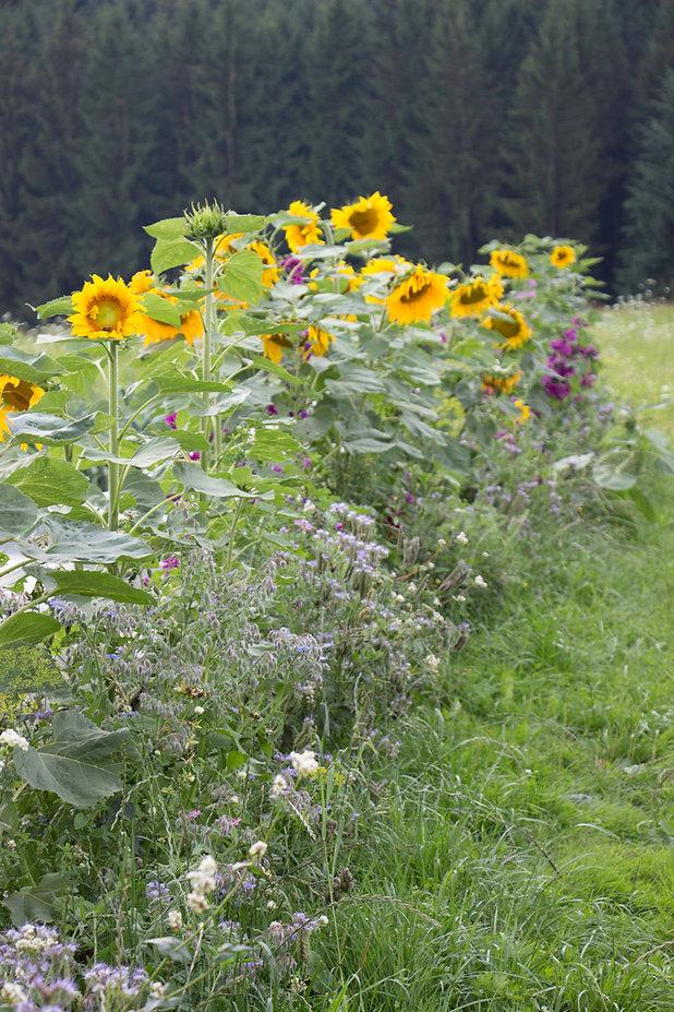 Gartenbilder 2014-2 Kopie.jpg