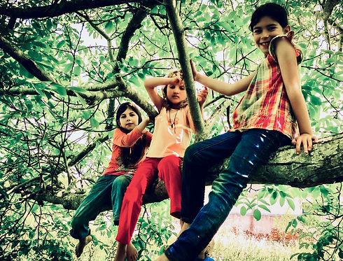 Em cima da árvore 2.jpeg