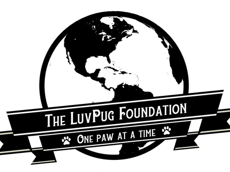 Welcome to the LuvPug Foundation Blog!