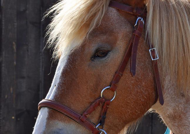 amelie et chevaux 78.jpg