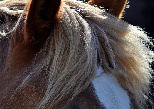 amelie et chevaux 70.jpg