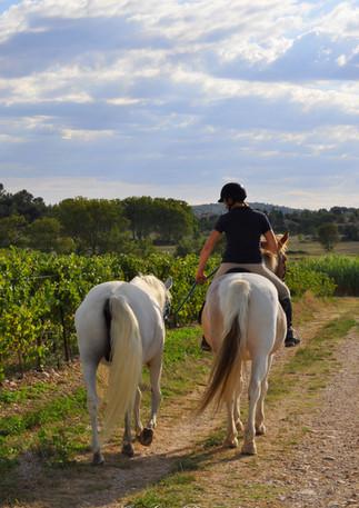 amelie et chevaux 96.jpg