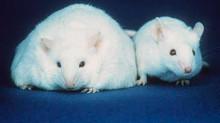 Obesità e memoria: quale correlazione?
