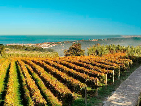 Lisbon Wine Region... More DOC's than any other Portuguese Wine Region... Nine Total!!!