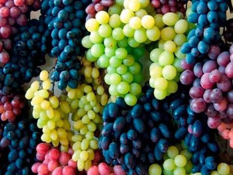 Portugal's 12 Wine Regions...