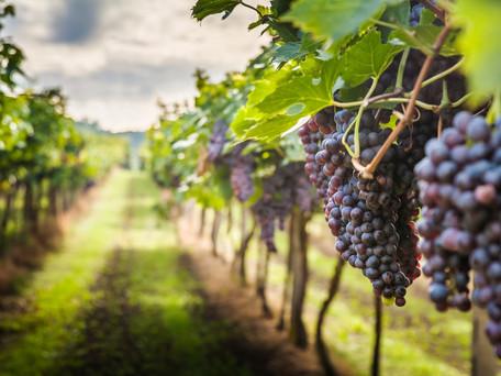 Dão Wine Region - Created with Winemaking in Mind...