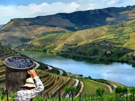The Porto and Douro Wine Region