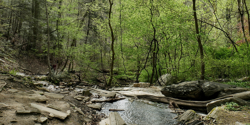 Walk in the Wissahickon: Mare of Easttown