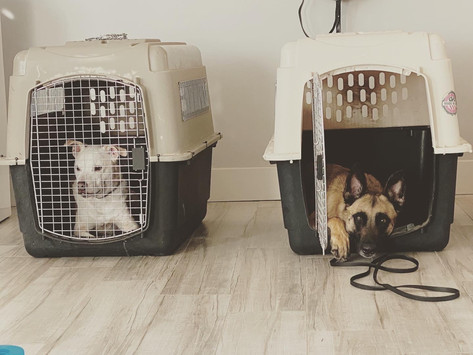 Does your dog have a problem with the kennel?