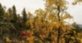 Seikkailu! #kuertunturi #äkäslompolo #pleasecheckyourroute #lumikenkäreittiilmanluntaeiolehyvä