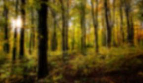 dorset coppice woods.jpg