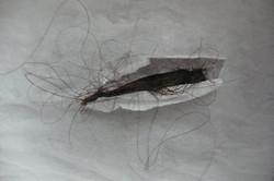 Kopie von Detail Haare und Papier