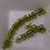 Thumbnail: Kohyo Sushi-budo Raisins de Mer (40g)
