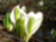 Fleur de Mizubasho