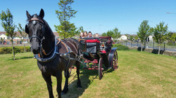 Festival Horse and Carriage