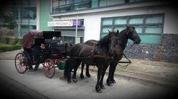 Balbriggans Horse & Carrige