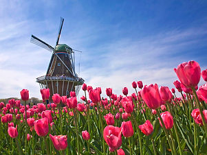 tulip_festival_at_windmill_island_park__