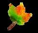 leaf-colour-3.png