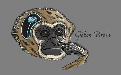 Gibbon Brain