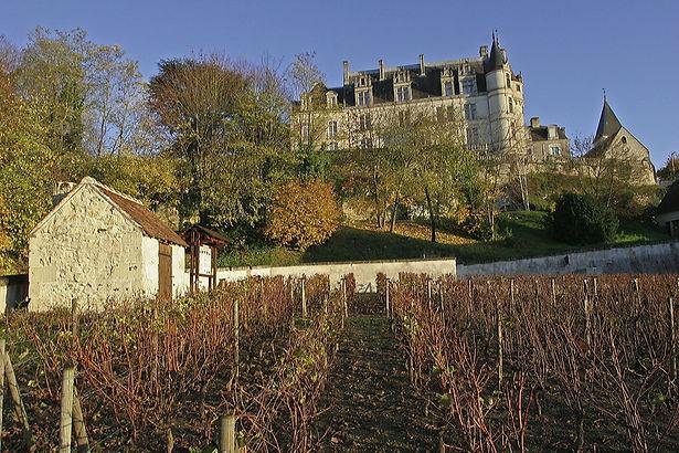 Vue du conservatoire de la vigne et du château de Chateauvieux