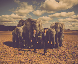 Elefanter_final_