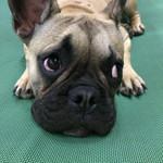 Puppy Eyes.jpg