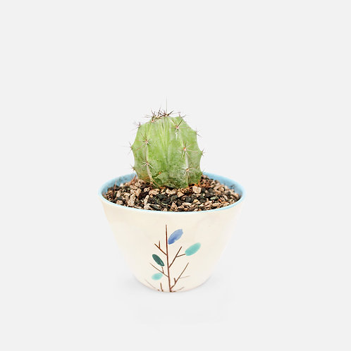 Cactus – Little Garden
