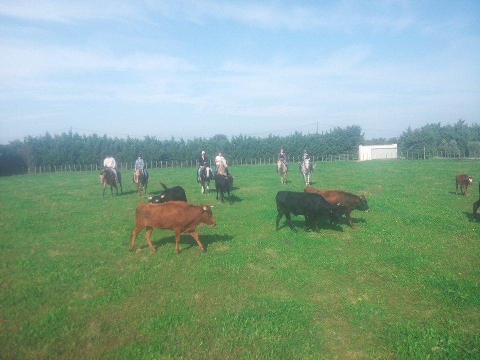 Approche du bétail dans le campo