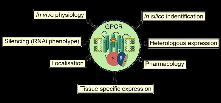 GPCRs copy.png